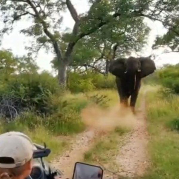 A jumbo encounter…