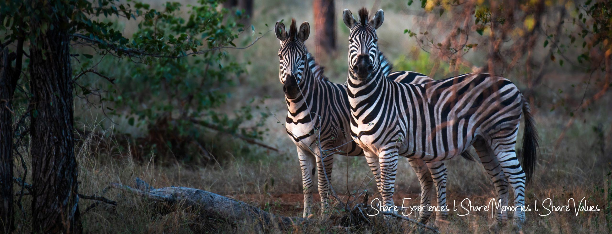 ZebraBanner
