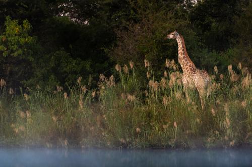 ABG_Giraffe_04