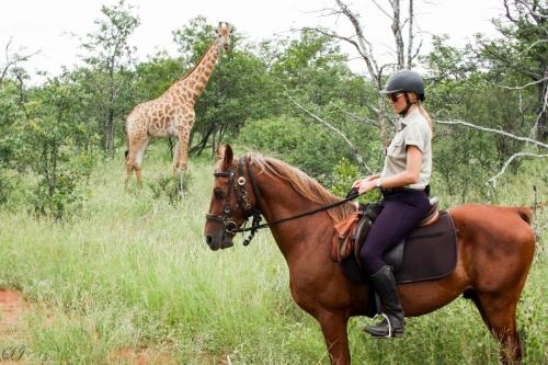 Abelana Horse Safaris 3