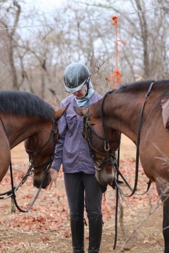 HorseSafari2